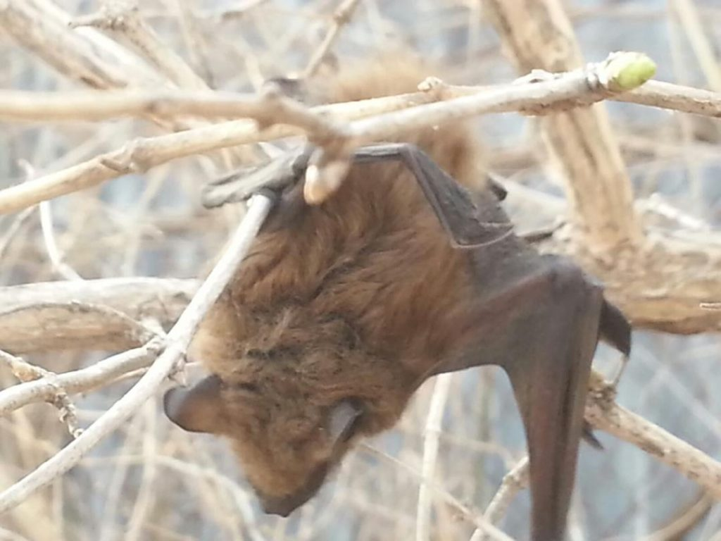 Bat Hanging on a Tree