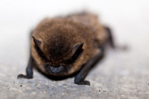 brown bat on concrete