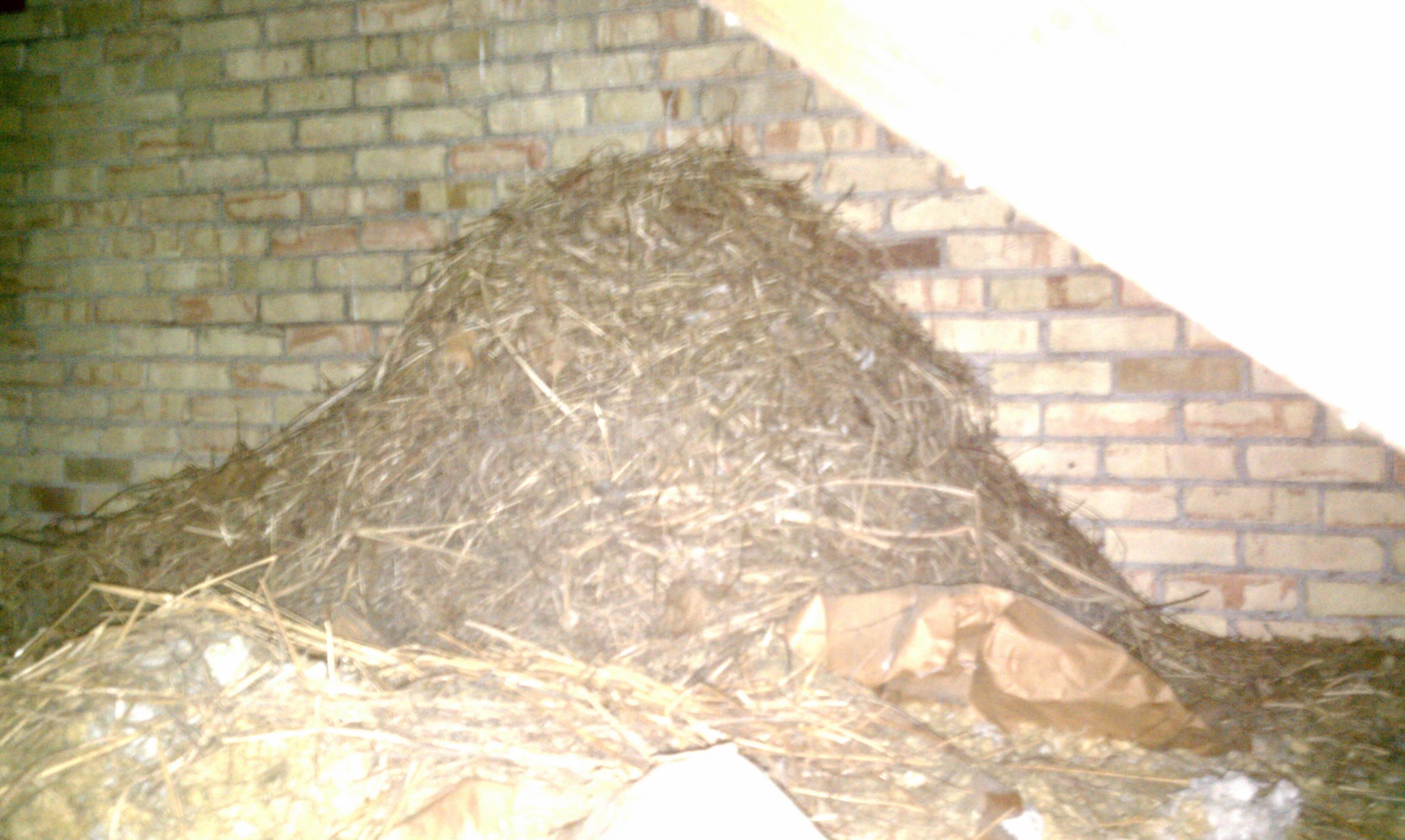 bird nest