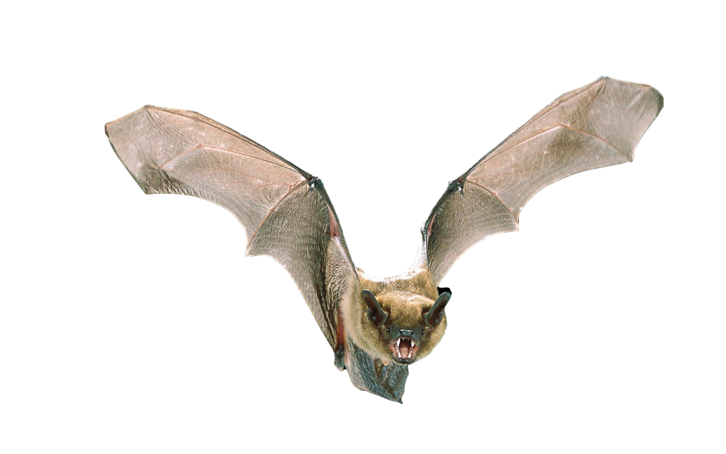 Michigan Wildlife Solutions Bat Services