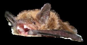 Michigan bat remocal cost