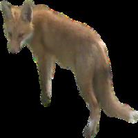 Fox trapping company in Michigan
