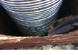 brown bat in chimney