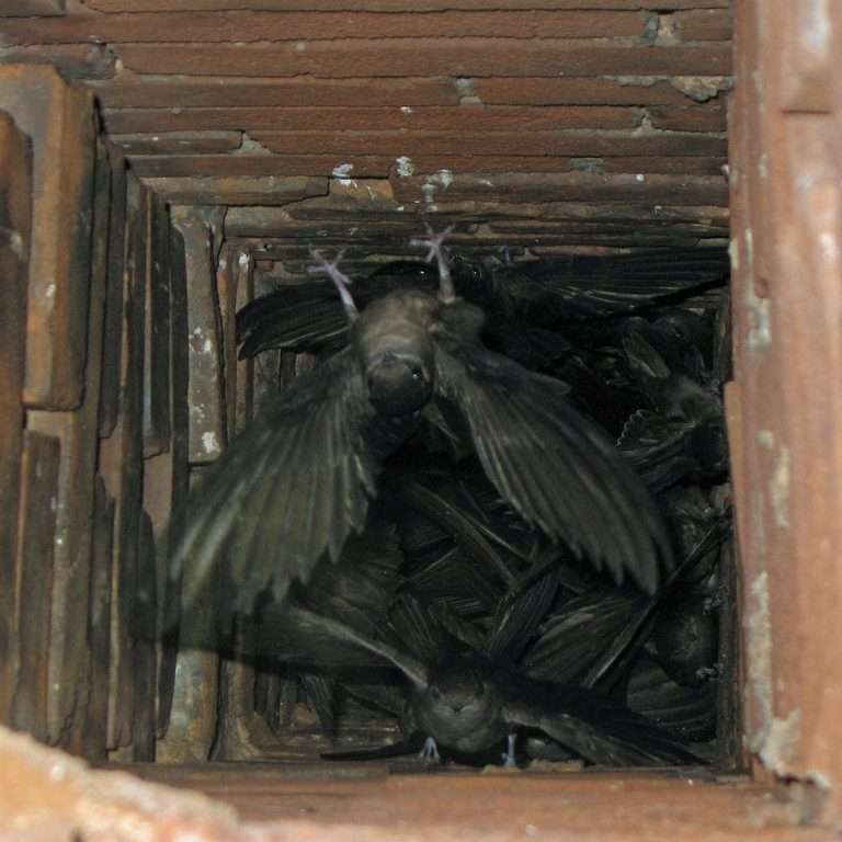 Commercial Amp Residential Bird Control Michigan Wildlife